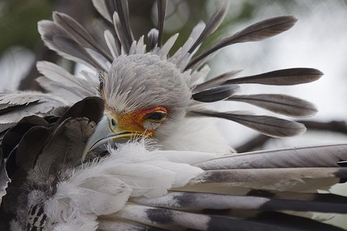 Đây là loài chim có hàng mi khiến chị em ghen tỵ - Ảnh 7.
