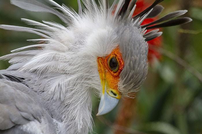 Đây là loài chim có hàng mi khiến chị em ghen tỵ - Ảnh 9.