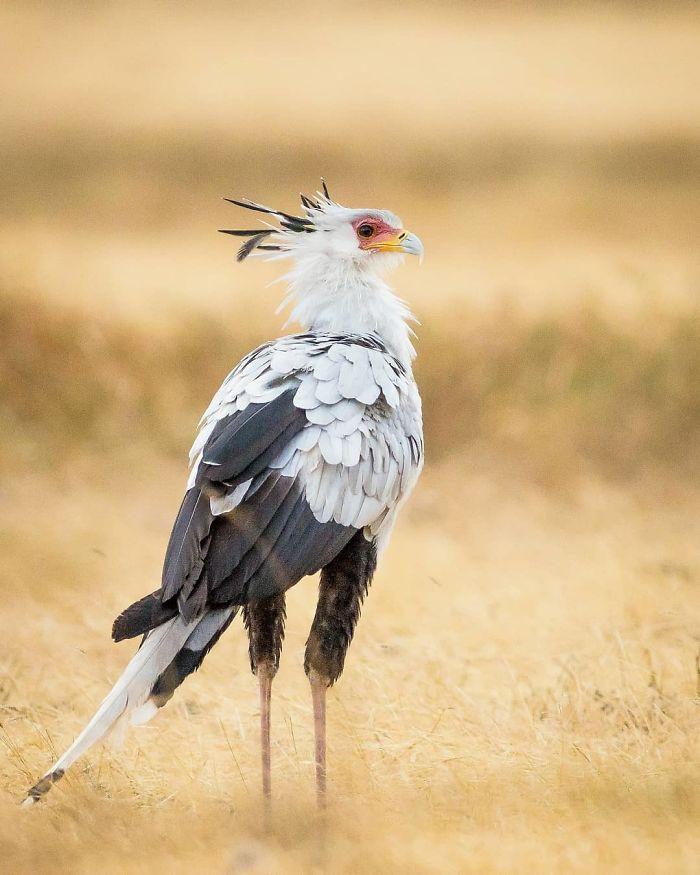 Đây là loài chim có hàng mi khiến chị em ghen tỵ - Ảnh 10.