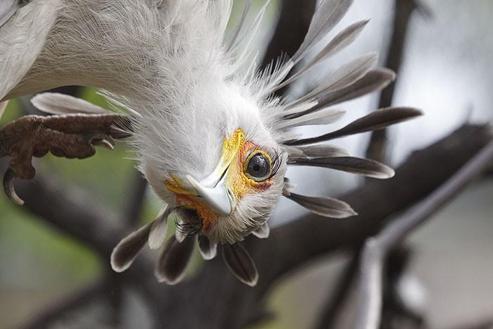 Đây là loài chim có hàng mi khiến chị em ghen tỵ - Ảnh 11.