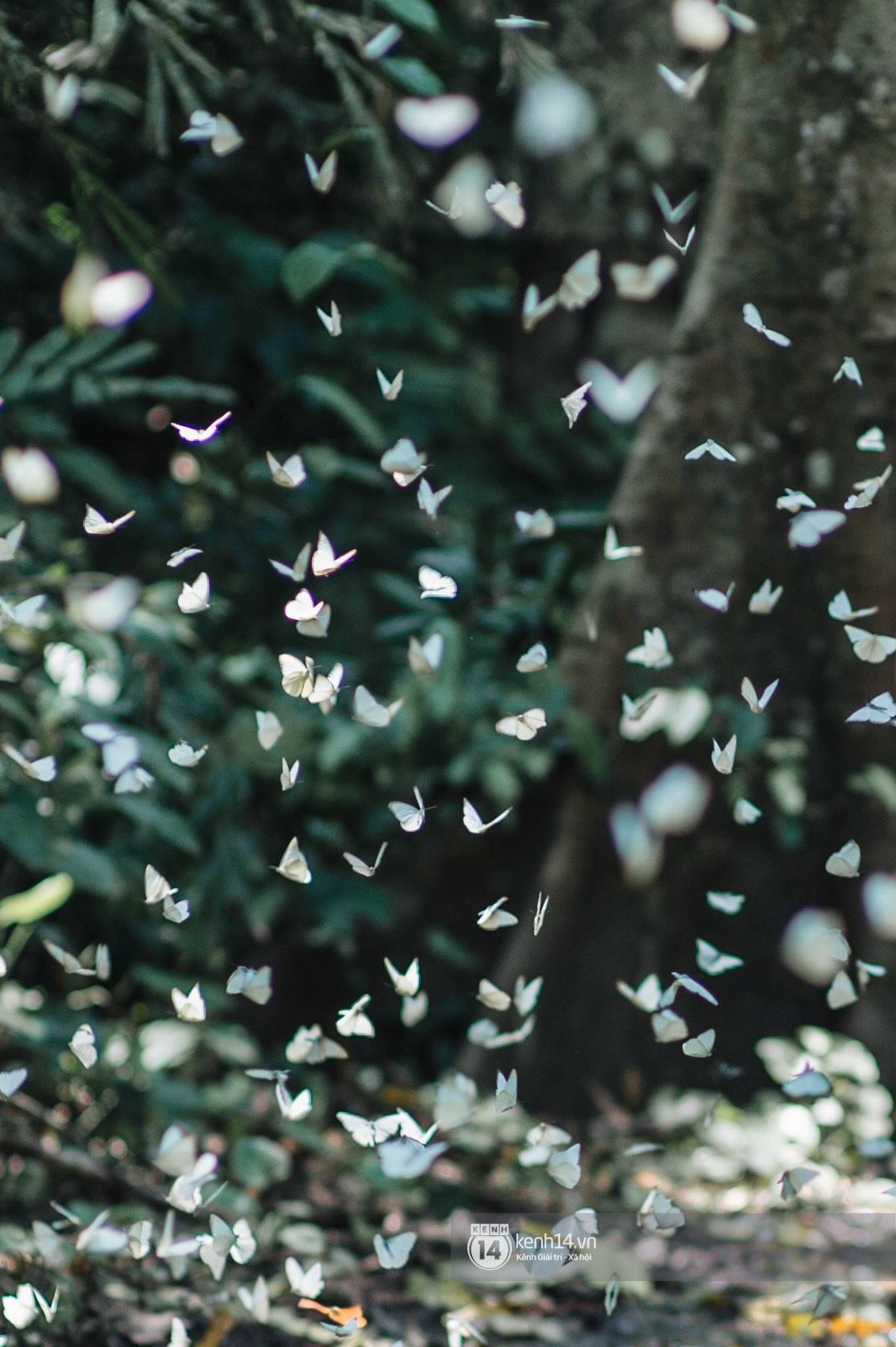 Chuyến đi Cúc Phương những ngày cuối mùa bướm rừng: Chốn thần tiên có vẻ đẹp riêng của sự muộn màng - Ảnh 9.