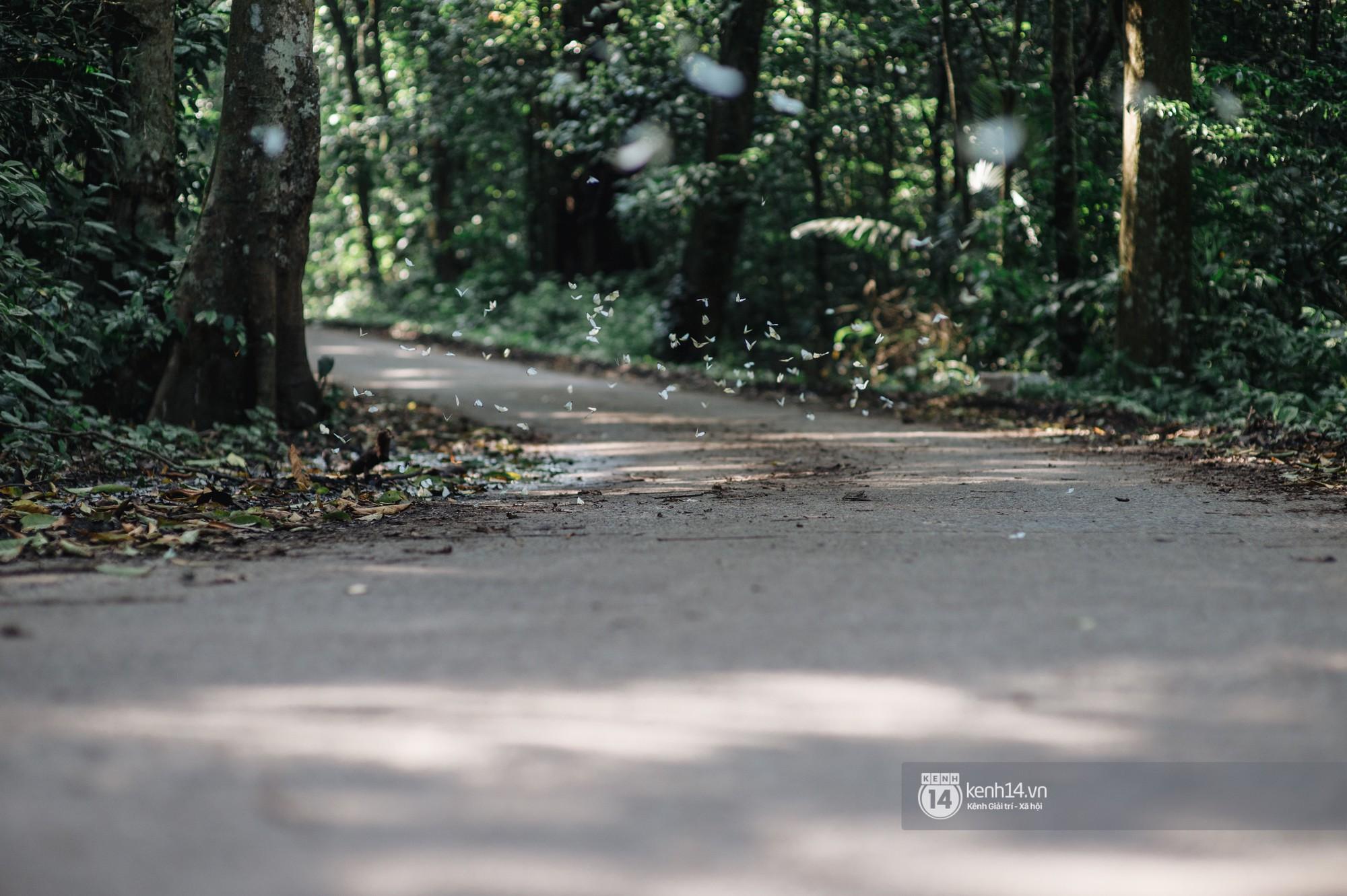 Chuyến đi Cúc Phương những ngày cuối mùa bướm rừng: Chốn thần tiên có vẻ đẹp riêng của sự muộn màng - Ảnh 3.