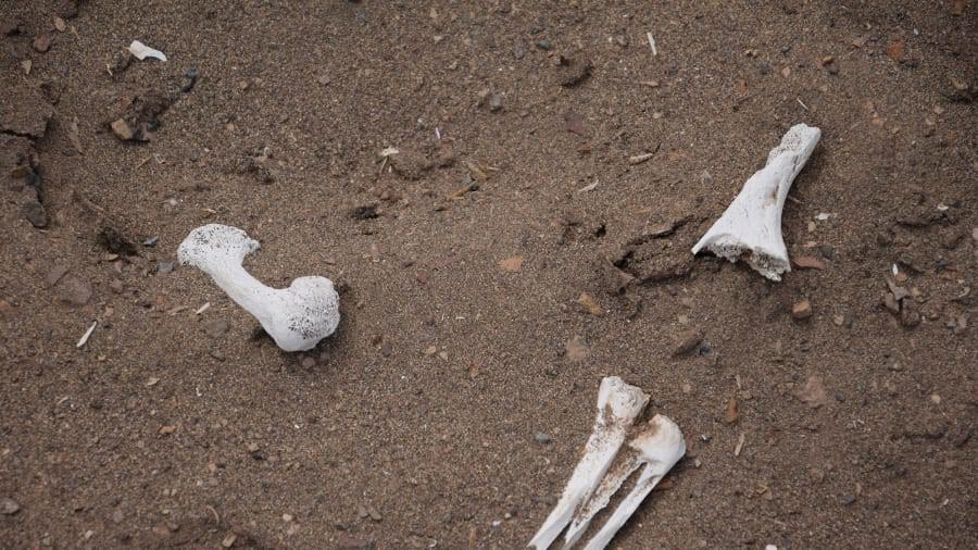 Ngạc nhiên chưa: Những xác ướp cổ nhất thế giới không phải của người Ai Cập - Ảnh 9.