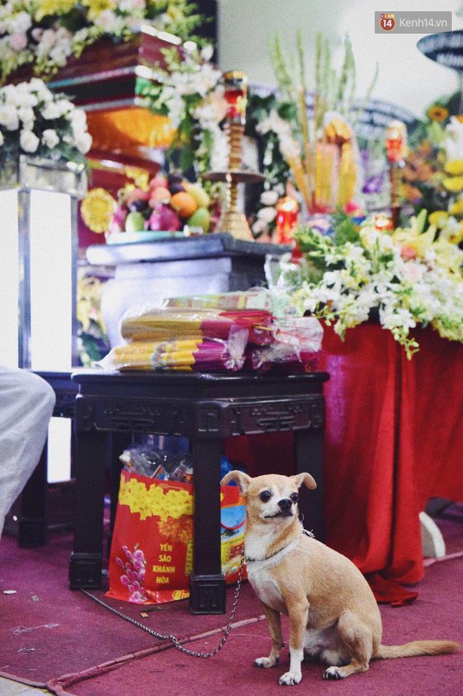 Chú chó Lucky được gia đình buộc tang trắng, quấn quýt bên linh cữu cố nghệ sĩ Lê Bình - Ảnh 3.