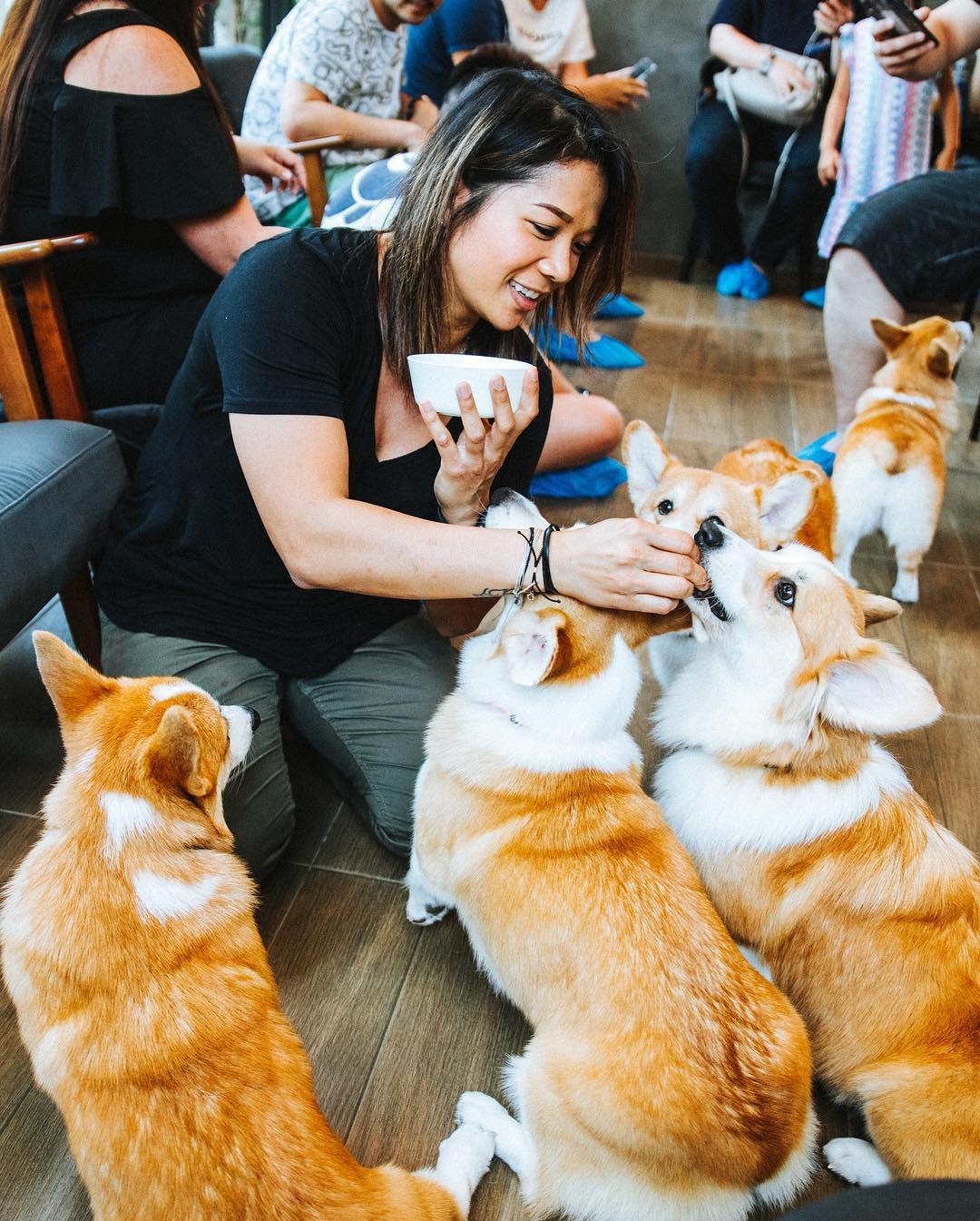 Siêu cấp dễ thương: Quán cà phê chó corgi nổi tiếng nhất Bangkok khiến dân tình phát sốt, con nào con nấy cũng ú nu ú nần - Ảnh 11.