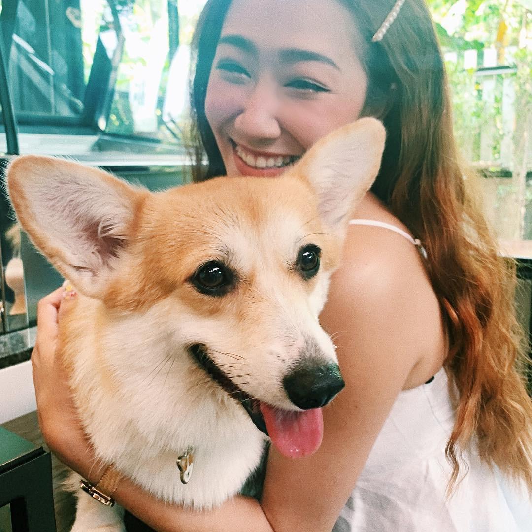 Siêu cấp dễ thương: Quán cà phê chó corgi nổi tiếng nhất Bangkok khiến dân tình phát sốt, con nào con nấy cũng ú nu ú nần - Ảnh 9.