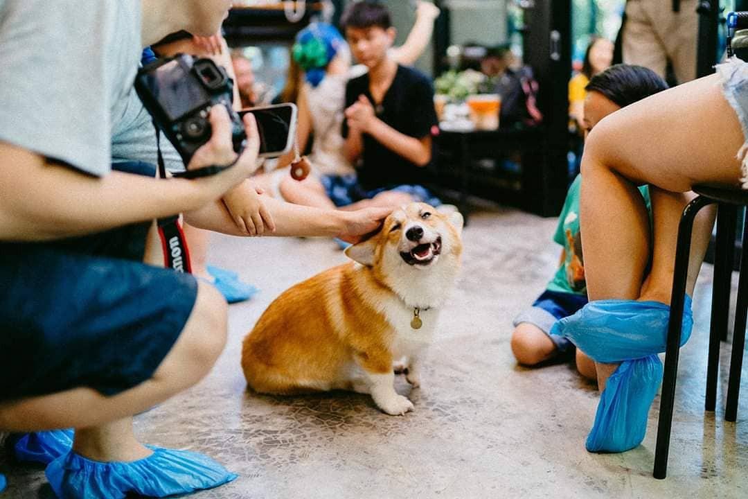 Siêu cấp dễ thương: Quán cà phê chó corgi nổi tiếng nhất Bangkok khiến dân tình phát sốt, con nào con nấy cũng ú nu ú nần - Ảnh 2.