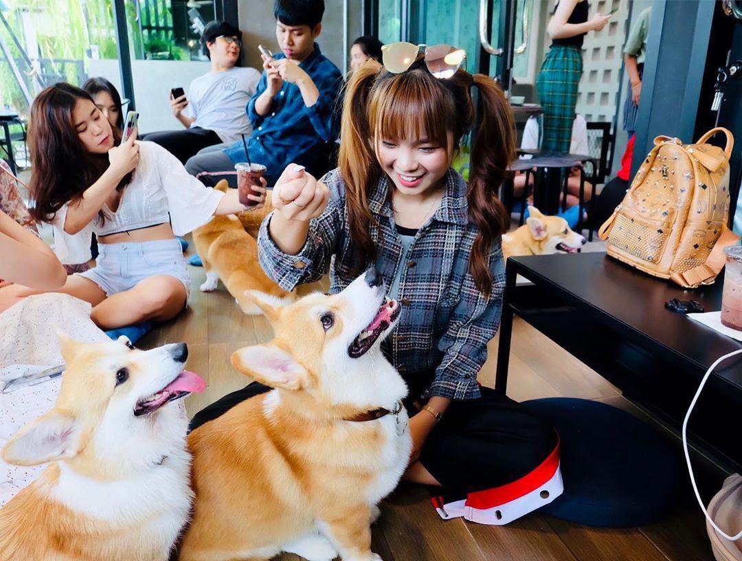 Siêu cấp dễ thương: Quán cà phê chó corgi nổi tiếng nhất Bangkok khiến dân tình phát sốt, con nào con nấy cũng ú nu ú nần - Ảnh 15.