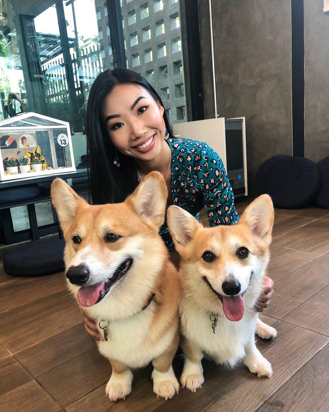 Siêu cấp dễ thương: Quán cà phê chó corgi nổi tiếng nhất Bangkok khiến dân tình phát sốt, con nào con nấy cũng ú nu ú nần - Ảnh 16.