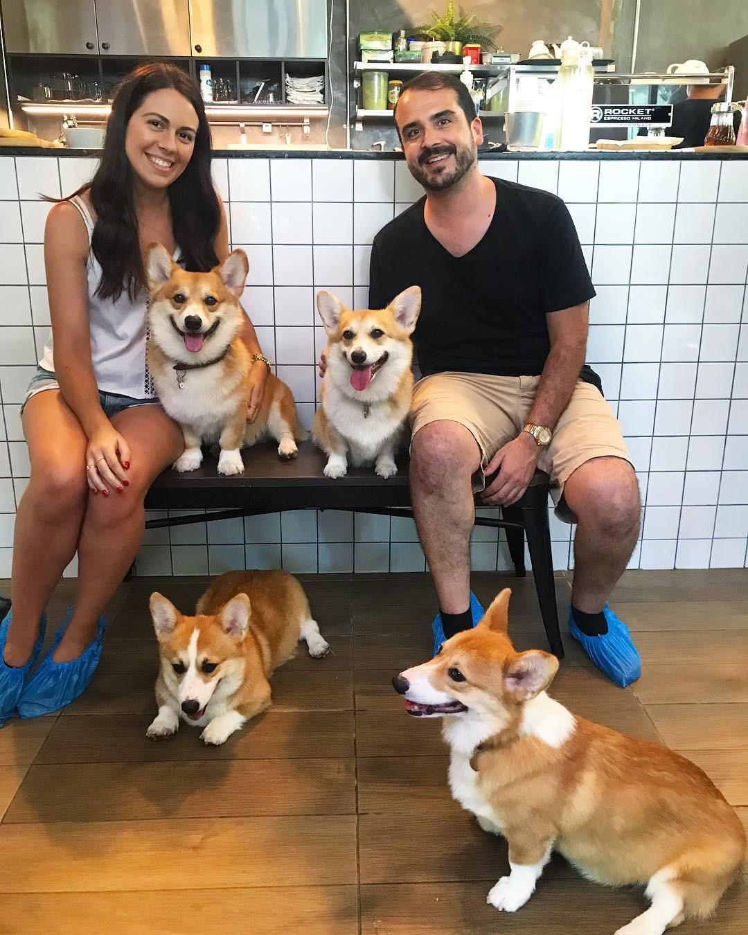 Siêu cấp dễ thương: Quán cà phê chó corgi nổi tiếng nhất Bangkok khiến dân tình phát sốt, con nào con nấy cũng ú nu ú nần - Ảnh 17.