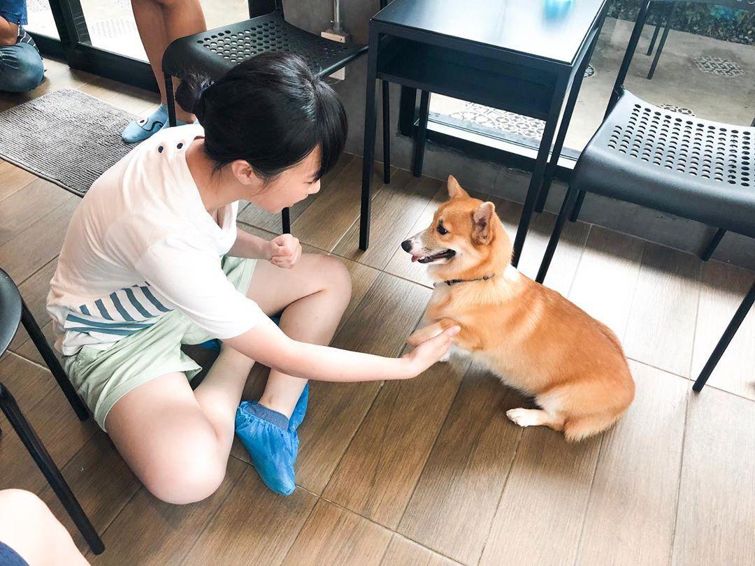 Siêu cấp dễ thương: Quán cà phê chó corgi nổi tiếng nhất Bangkok khiến dân tình phát sốt, con nào con nấy cũng ú nu ú nần - Ảnh 19.