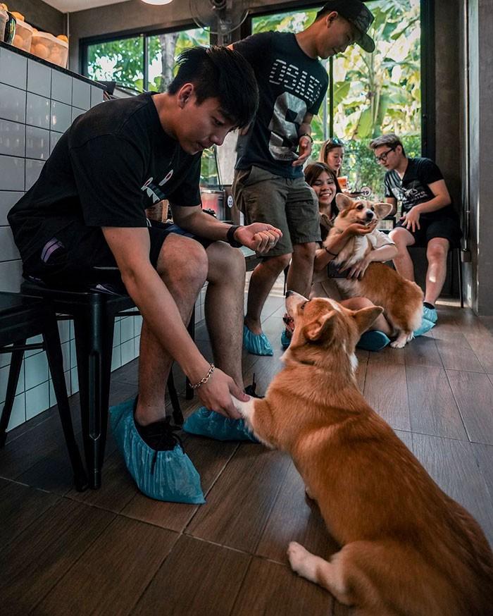 Ngắm nghía quán cà phê chó Corgi ở Thái Lan đang khiến cả MXH phát cuồng vì đáng yêu hết nấc - Ảnh 4.