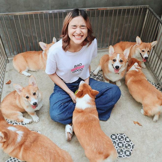 Ngắm nghía quán cà phê chó Corgi ở Thái Lan đang khiến cả MXH phát cuồng vì đáng yêu hết nấc - Ảnh 7.