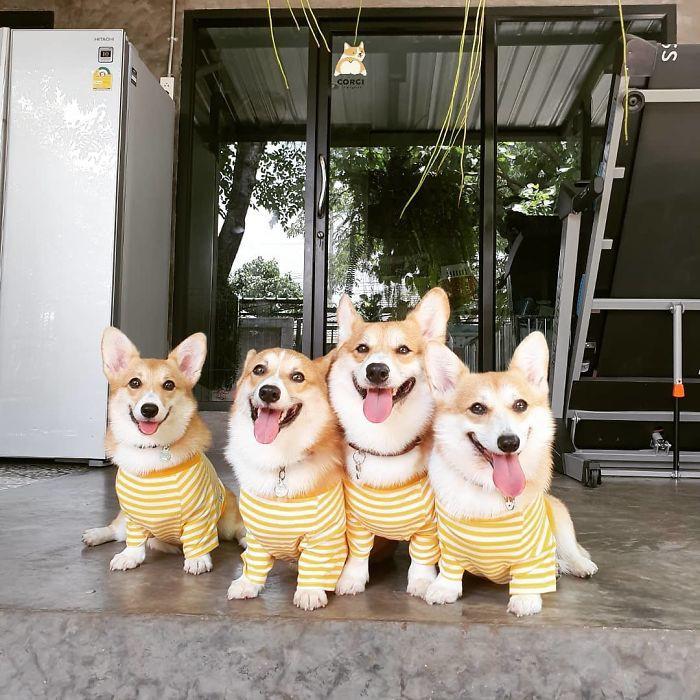 Ngắm nghía quán cà phê chó Corgi ở Thái Lan đang khiến cả MXH phát cuồng vì đáng yêu hết nấc - Ảnh 12.