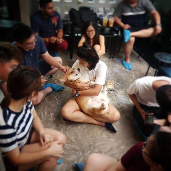 Ngắm nghía quán cà phê chó Corgi ở Thái Lan đang khiến cả MXH phát cuồng vì đáng yêu hết nấc - Ảnh 9.