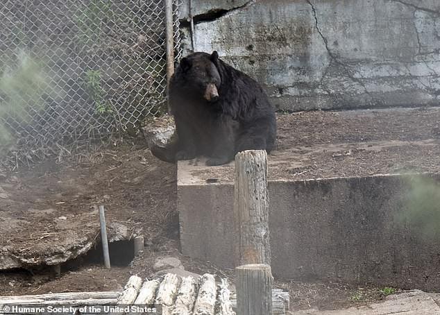 Giải cứu thú quý hiếm trong sở thú tồi tàn ven đường: hơn 100 cá thể bị bạc đãi, bỏ đói... khiến nhiều người phẫn nộ - Ảnh 1.