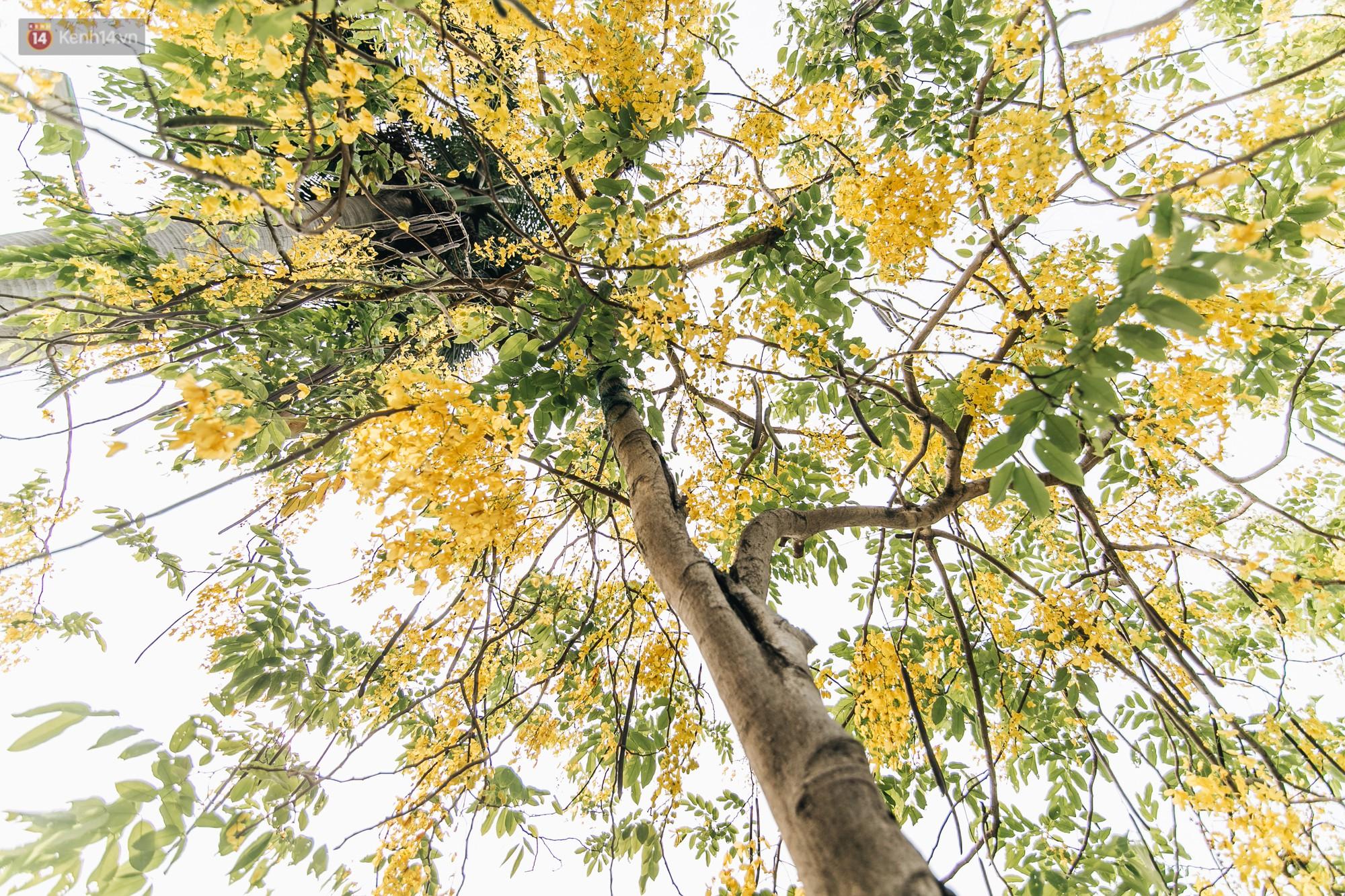 Chùm ảnh: Hà Nội và bản tình ca của những loài hoa mùa hạ thay nhau khoe sắc trên phố - Ảnh 15.