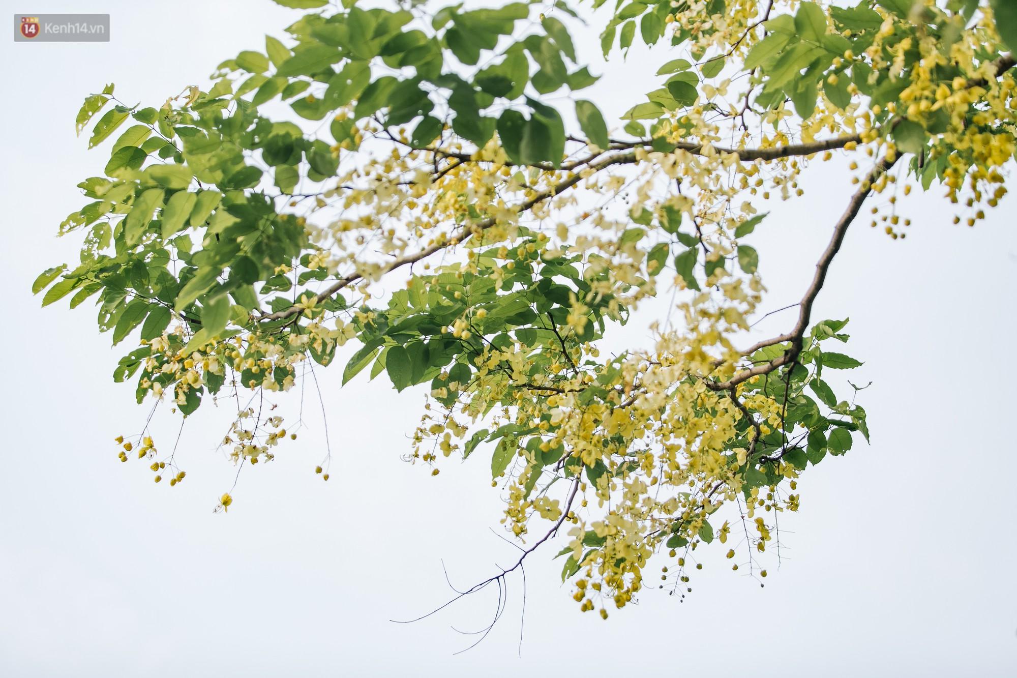 Chùm ảnh: Hà Nội và bản tình ca của những loài hoa mùa hạ thay nhau khoe sắc trên phố - Ảnh 18.