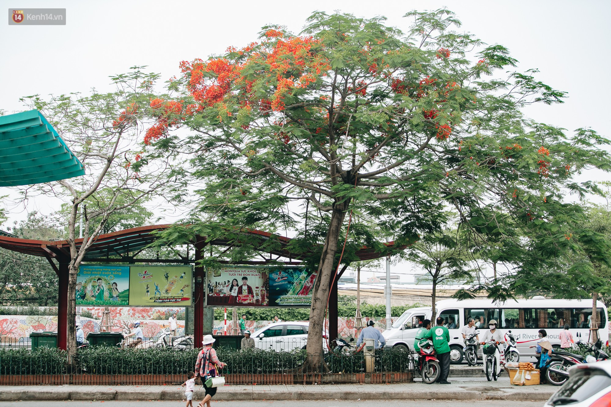 Chùm ảnh: Hà Nội và bản tình ca của những loài hoa mùa hạ thay nhau khoe sắc trên phố - Ảnh 3.