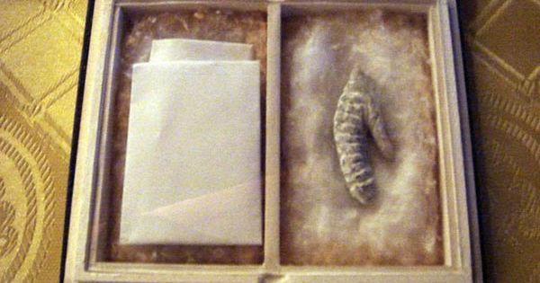 Câu chuyện về những thứ kỳ quái nhất từng được đem ra trưng bày trong bảo tàng: Não, thủ cấp và bộ phận sinh dục con người - Ảnh 7.