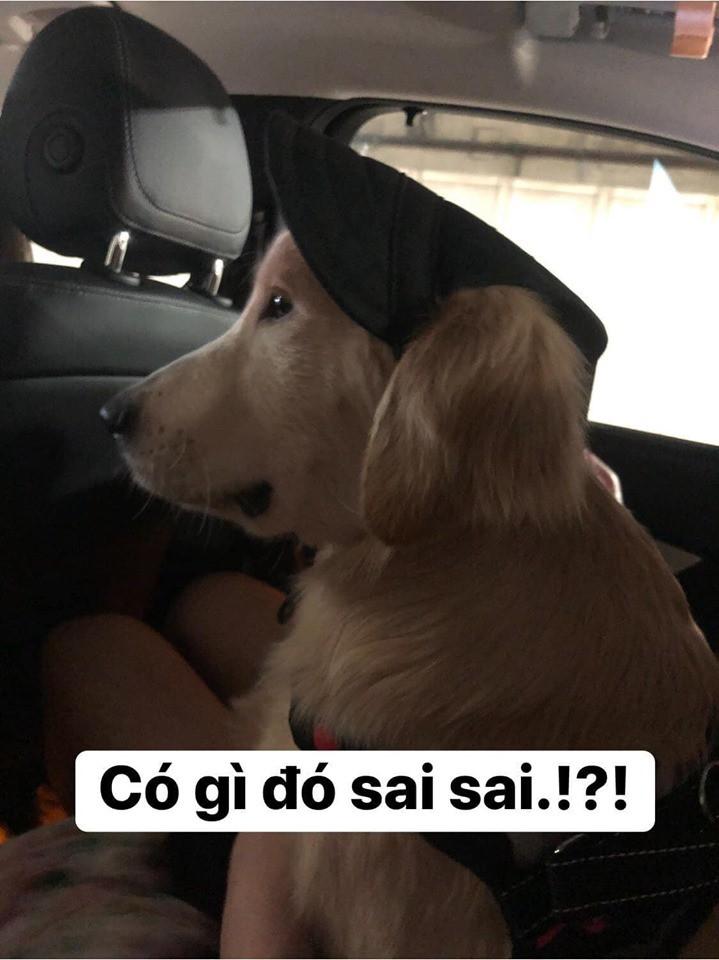Chú chó đốn tim cư dân mạng bởi loạt biểu cảm nói hộ nỗi lòng của những người... say xe khi đi du lịch - Ảnh 5.
