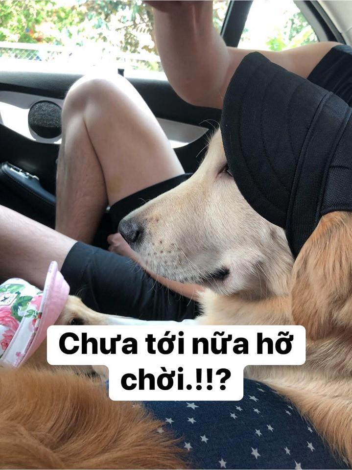 Chú chó đốn tim cư dân mạng bởi loạt biểu cảm nói hộ nỗi lòng của những người... say xe khi đi du lịch - Ảnh 17.