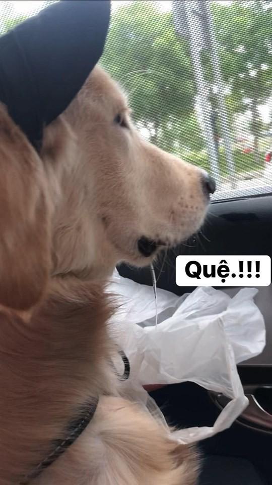 Chú chó đốn tim cư dân mạng bởi loạt biểu cảm nói hộ nỗi lòng của những người... say xe khi đi du lịch - Ảnh 7.