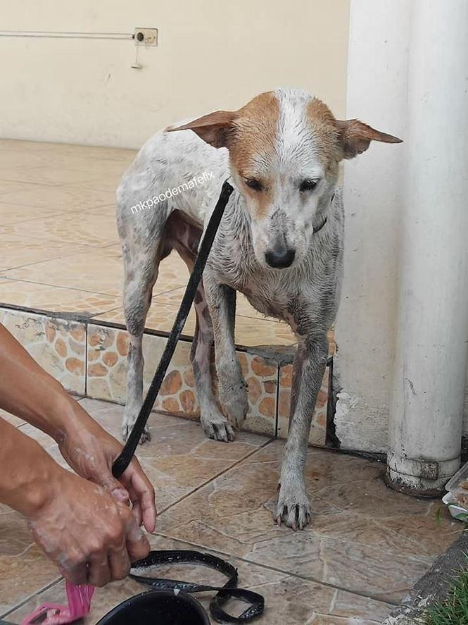 Rơi nước mắt với chú chó khóc nấc trước quan tài của giáo sư - Ảnh 9.