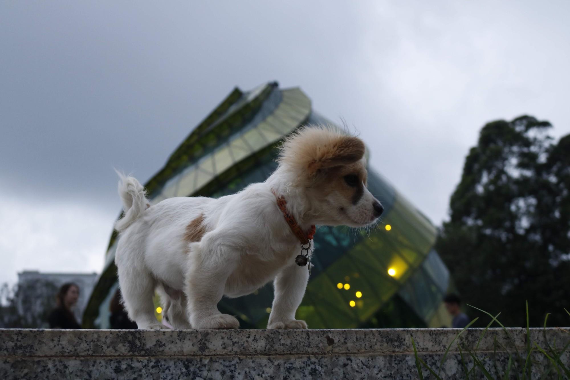 """Cún cưng tên Tiểu Cư và hành trình đi phượt khắp nơi cùng cô cậu chủ: Boss nào """"chịu chơi"""" hơn em? - Ảnh 6."""