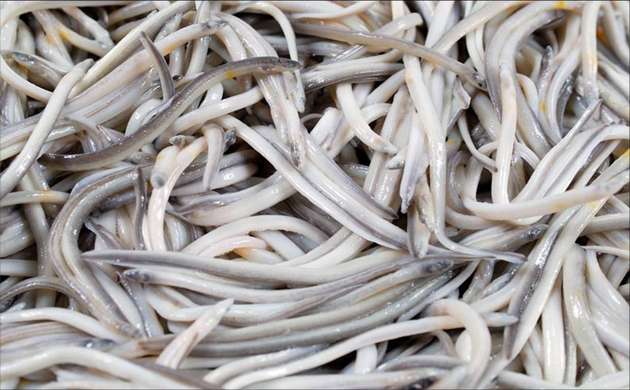 Thời buổi lạ kì, một ký lươn nhỏ xíu xiu có vị nhạt nhẽo cũng bị hét giá tới… 26 triệu đồng - Ảnh 1.