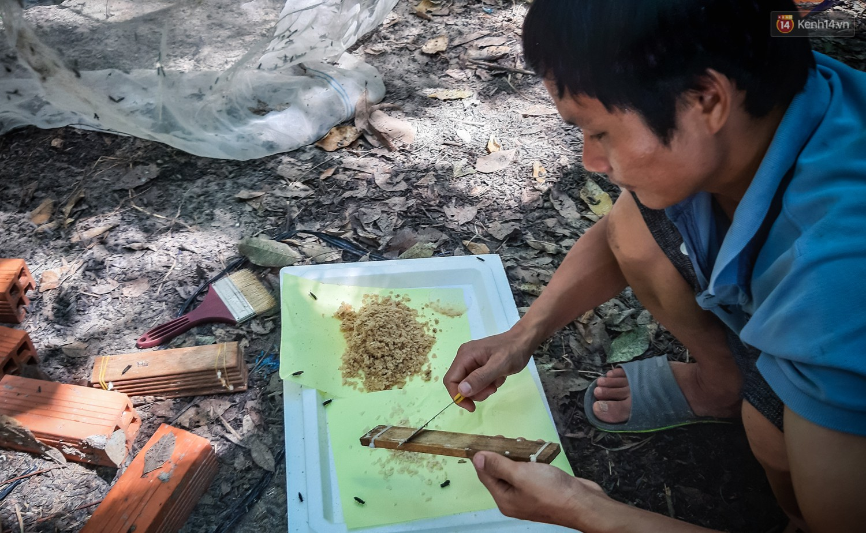Chàng kỹ sư Sài Gòn bỏ việc về quê nuôi ruồi, doanh thu 80 triệu đồng/tháng: Từng bị gia đình phản đối, bạn bè cười nhạo - Ảnh 6.