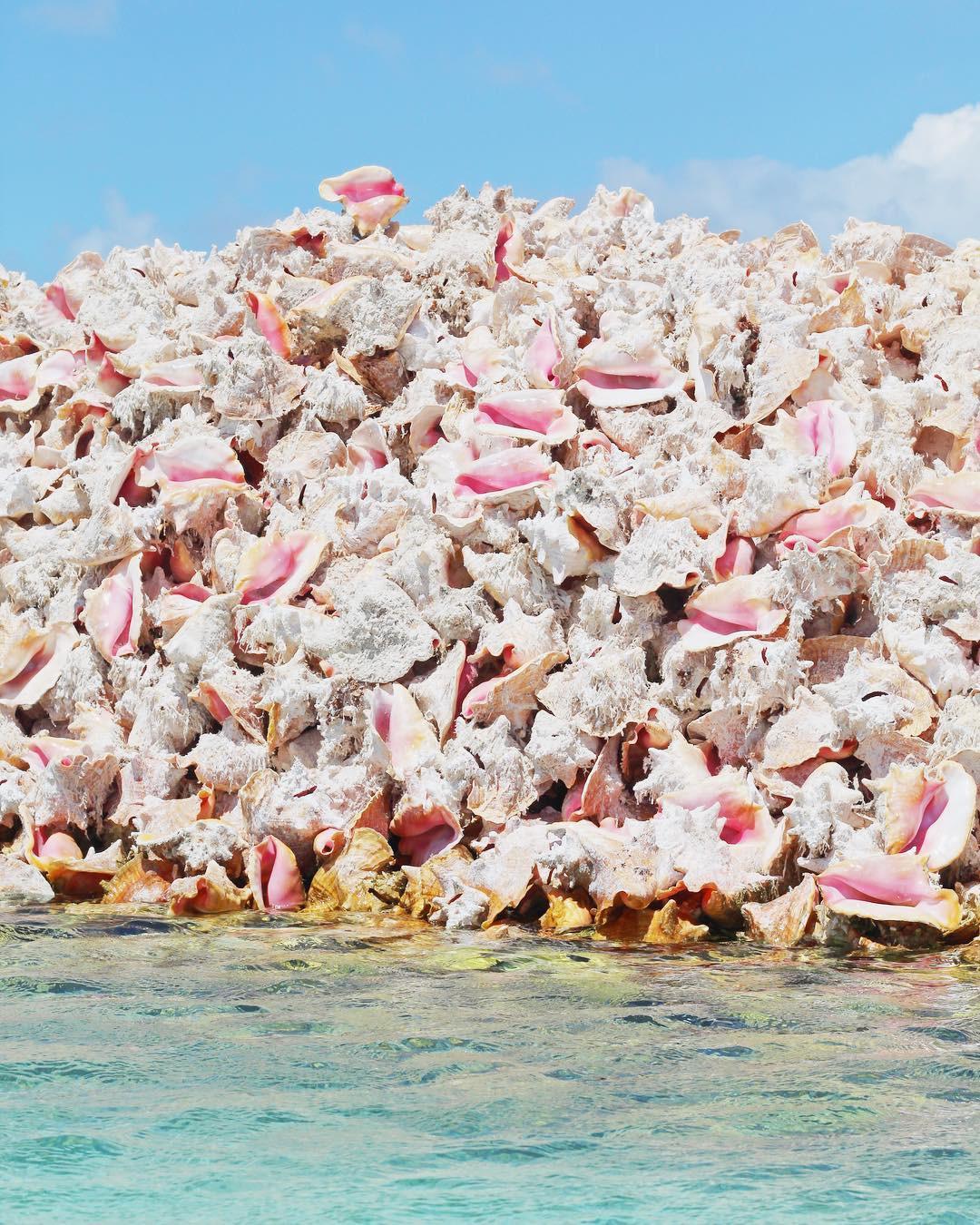 Hoá ra, hòn đảo ăn ốc đổ vỏ là có thật: Mới nhìn hình thôi mà đã thấy nhức chân lắm rồi! - Ảnh 11.