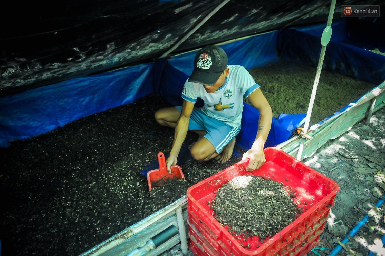 Chàng kỹ sư Sài Gòn bỏ việc về quê nuôi ruồi, doanh thu 80 triệu đồng/tháng: Từng bị gia đình phản đối, bạn bè cười nhạo - Ảnh 9.