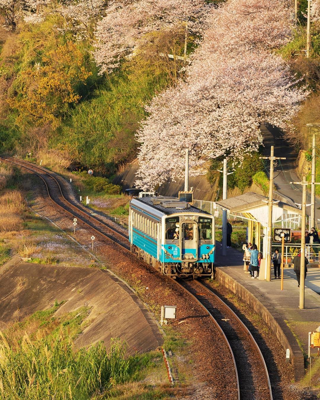 Nhà ga cô độc ở Nhật Bản có gì mà khiến cho ai đến đây rồi cũng muốn trở lại đi thêm nhiều lần nữa? - Ảnh 7.