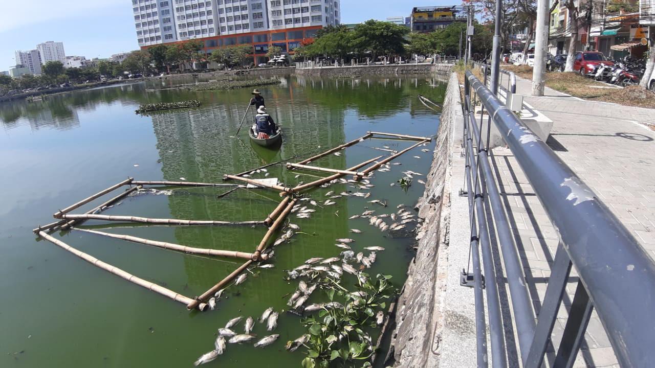 Đà Nẵng: Cá chết hàng loạt, nổi lềnh bềnh trên hồ Thạc Gián - Ảnh 6.