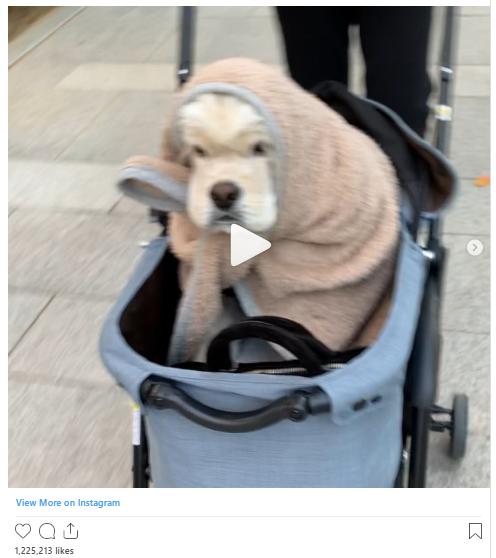 18 khoảnh khắc triệu like gây bão Instagram của Jennie: Bí quyết nằm ở body, 1 mỹ nhân đặc biệt được ưu ái lộ diện - Ảnh 7.