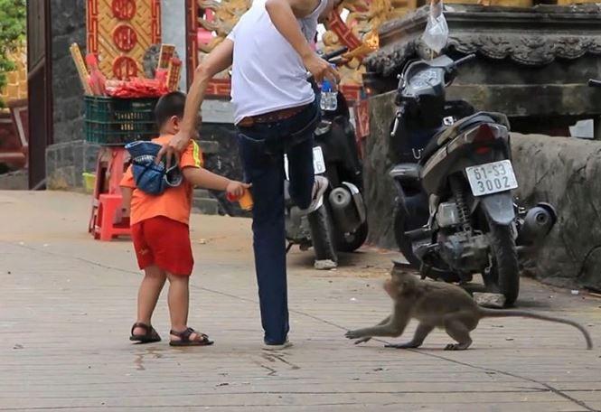 Bình Dương: Sau vụ hổ cắn lìa tay, lại xuất hiện khỉ cắn người - Ảnh 2.