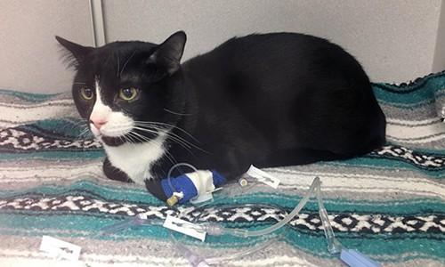 Suýt chết vì bị chủ nhân quay trong máy giặt 35 phút, con mèo số nhọ được cả MXH mệnh danh là sạch nhất thế giới - Ảnh 1.