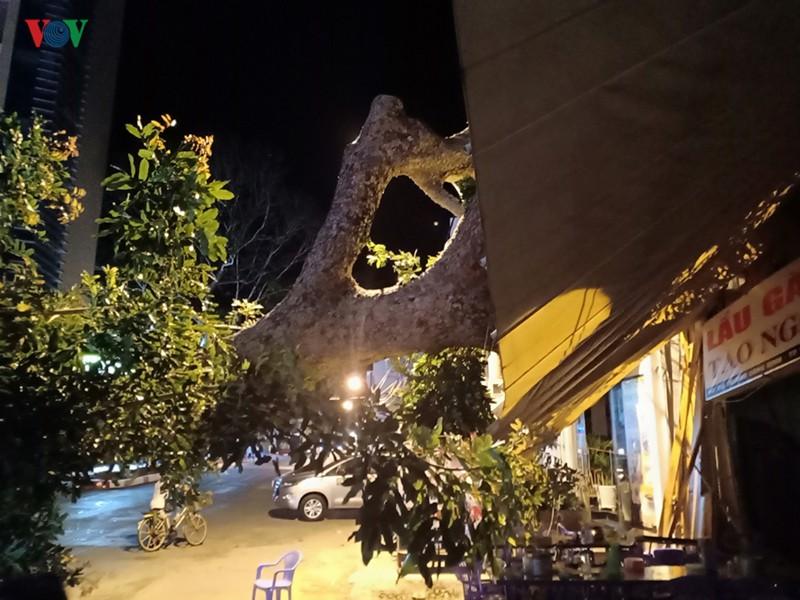Cây cổ thụ gần 100 tuổi trốc gốc đổ vào quán ăn, nhiều người tháo chạy - Ảnh 1.