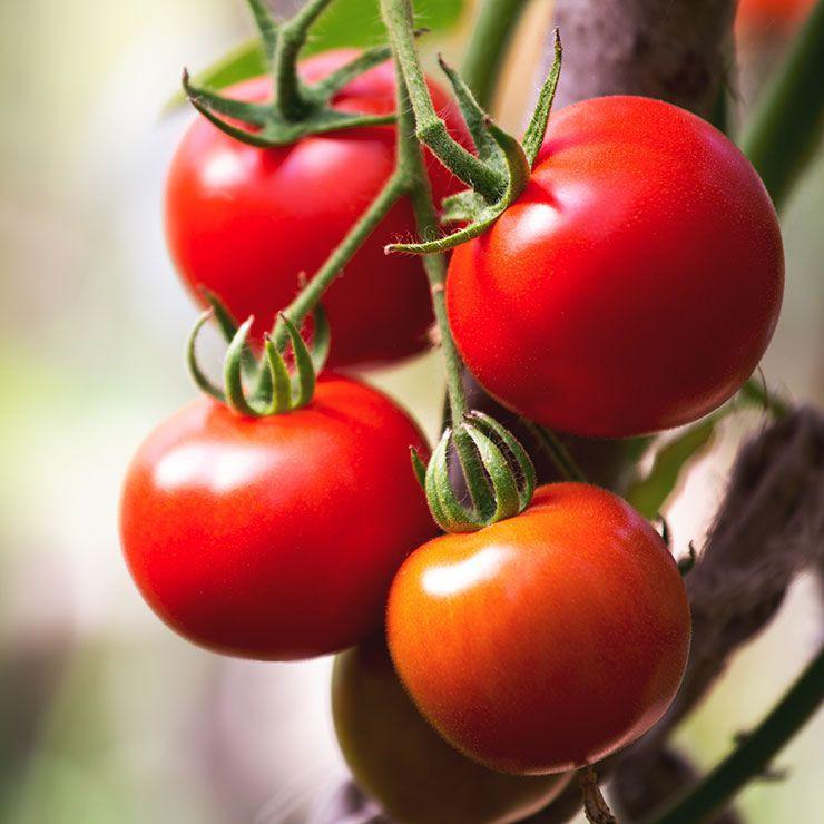 9 thực phẩm giảm cân tốt nhất trong mùa hè - Ảnh 1.