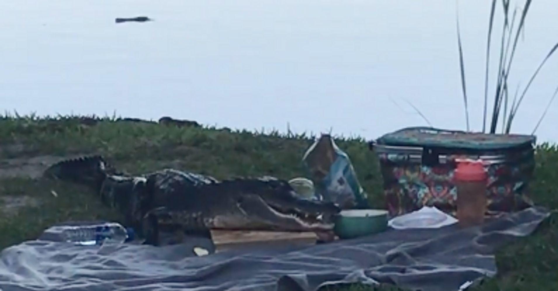 Cặp đôi đang đi picnic thì bị cá sấu đến hăm doạ, trấn lột hết sạch đồ ăn - Ảnh 1.