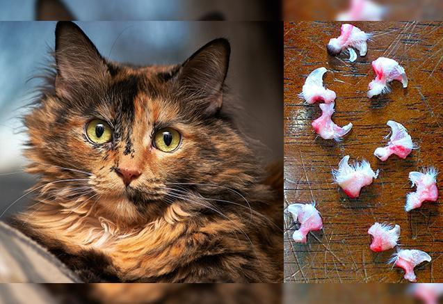 Dự luật biến New York thành tiểu bang đầu tiên cấm rút móng mèo: Vậy ra bấy lâu nay con người đã đối xử với chúng tàn bạo quá - Ảnh 1.
