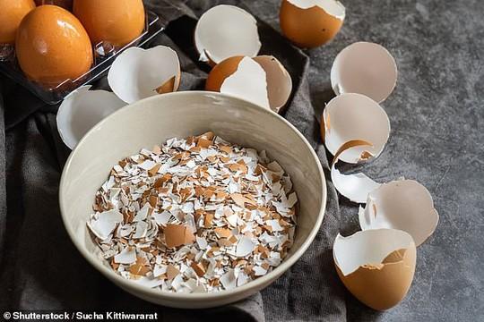 Phát hiện tác dụng chữa bệnh đáng ngạc nhiên của… vỏ trứng - Ảnh 1.