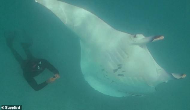 Cảnh cá đuối cầu cứu thợ lặn vì không thể lấy được lưỡi câu mắc sâu vào mắt khiến người xem bất ngờ - Ảnh 2.