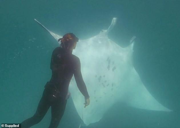 Cảnh cá đuối cầu cứu thợ lặn vì không thể lấy được lưỡi câu mắc sâu vào mắt khiến người xem bất ngờ - Ảnh 1.