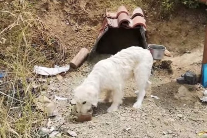 Sau khi chủ qua đời, chú chó trung thành vẫn đứng chờ ở nơi xảy ra tai nạn suốt 18 tháng trời nhất quyết không chịu rời đi - Ảnh 2.