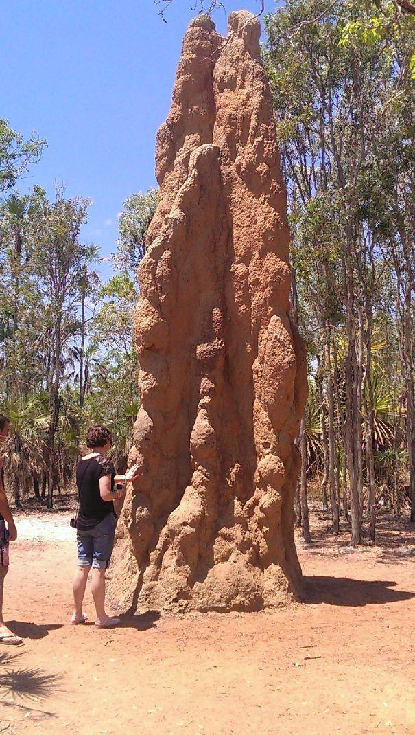 Nước Úc nguy hiểm: Tập hợp những thứ gớm ghiếc siêu to khổng lồ, không tìm được ở đây thì chẳng nơi nào có cả - Ảnh 12.