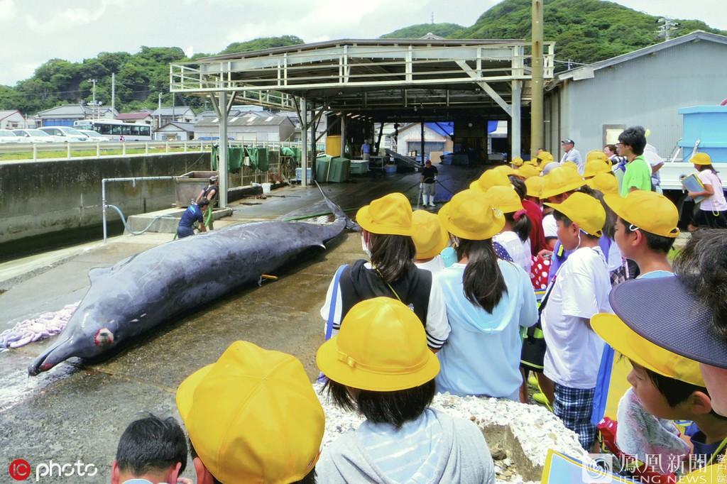 Trường tiểu học ở Nhật Bản cho học sinh quan sát cảnh giết cá voi sau đó viết bài nêu cảm nghĩ - Ảnh 1.