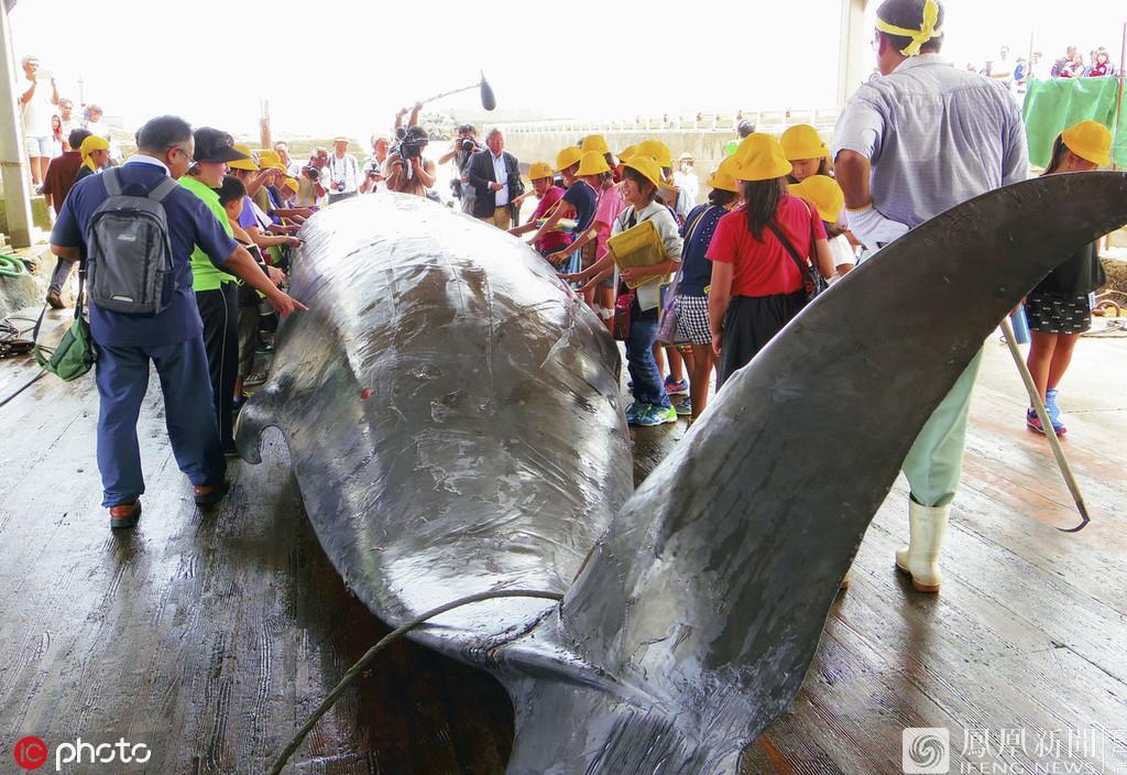 Trường tiểu học ở Nhật Bản cho học sinh quan sát cảnh giết cá voi sau đó viết bài nêu cảm nghĩ - Ảnh 2.