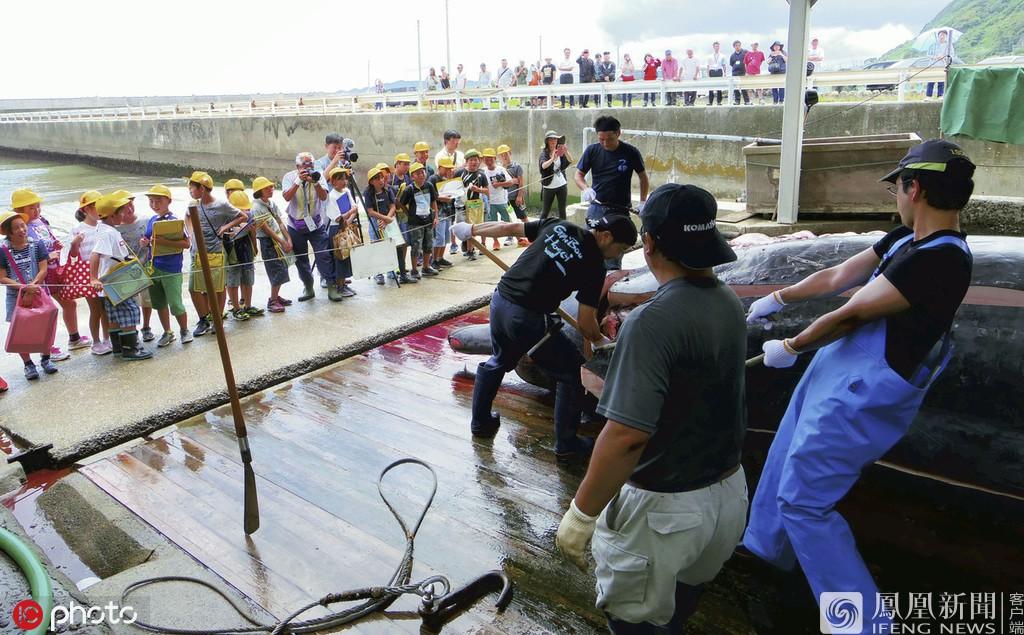 Trường tiểu học ở Nhật Bản cho học sinh quan sát cảnh giết cá voi sau đó viết bài nêu cảm nghĩ - Ảnh 3.
